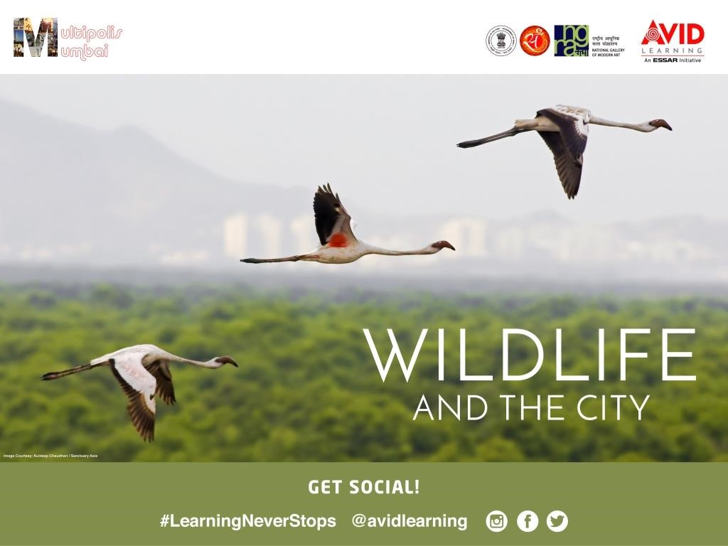 Wildlife and the City-PPT Slide.jpg